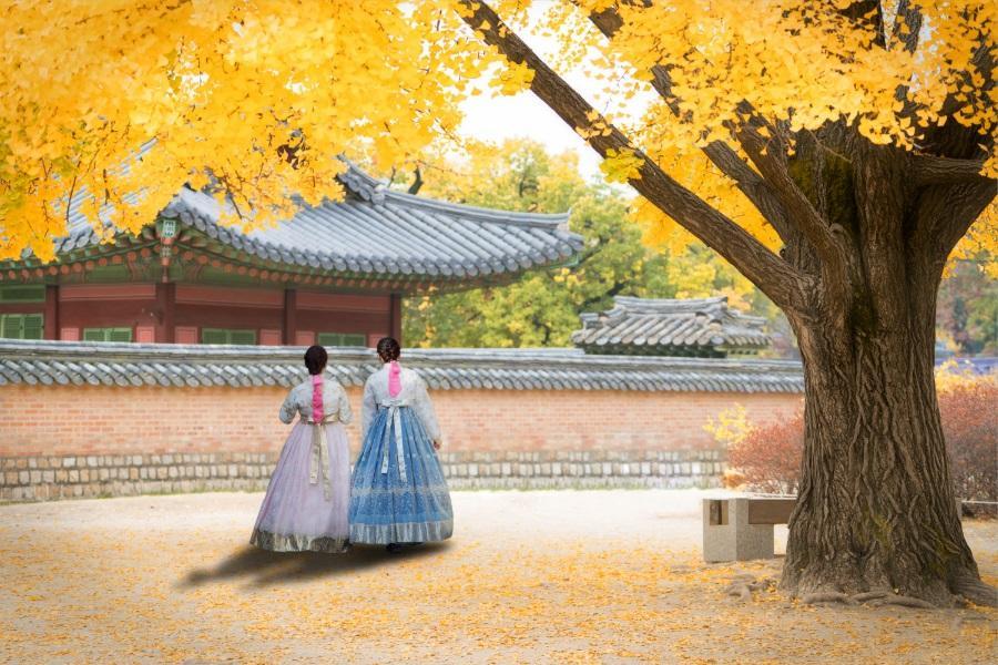 升等五星~韓國變妝遊景福宮、樂天世界、晨靜樹木園、星空圖書館、不進保肝