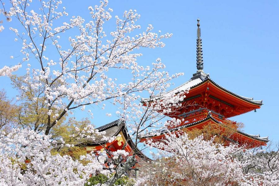 百選櫻花名所、嵐山清水寺、MIHO美術館、彥根城古街5日(名古屋)