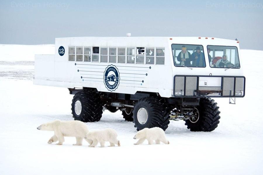 【玩美加族】尋覓絕跡北極熊傳說9日(巨輪觀熊越野車2日、露易絲湖城堡)