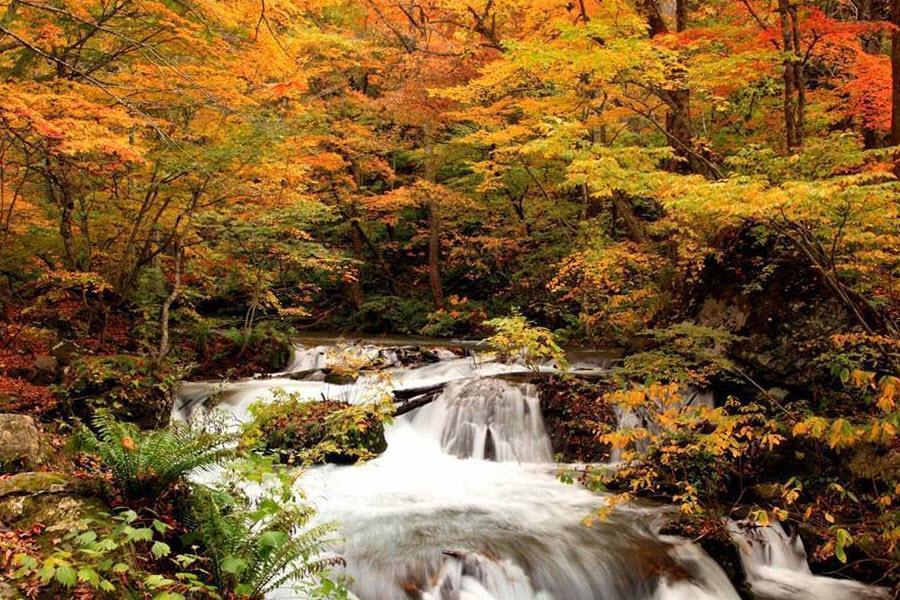 【星野青森屋】楓紅奧入瀨溪、白神山地、小坂鐵道騎士5日
