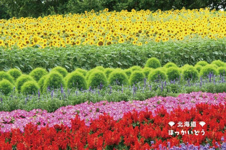 【超值夏豔富良野】函館夜景、海洋尼克斯、洞爺湖熊牧場、哈密瓜放題5日