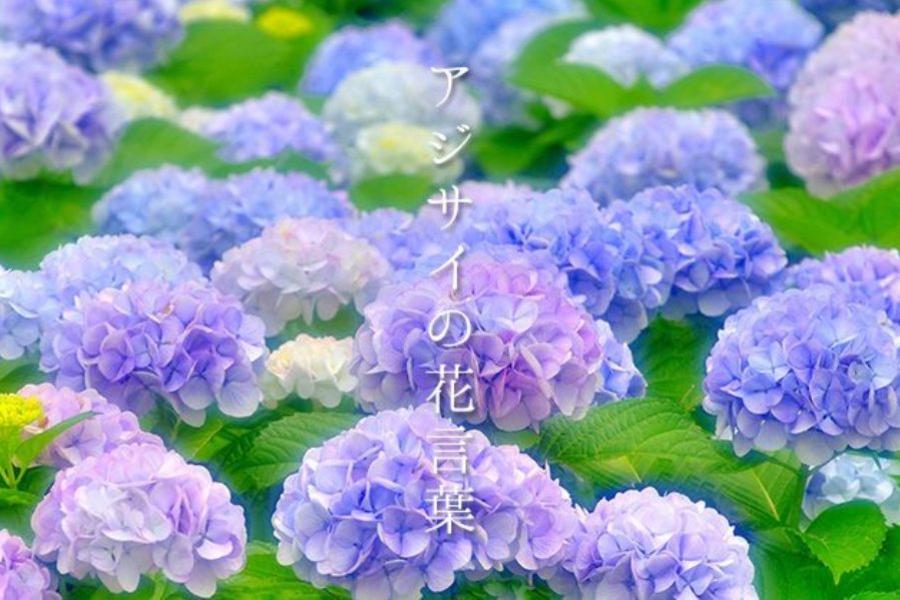 《初夏漫步》彼得兔英國節.京都清水寺.綠野童話屋.MIHO5日