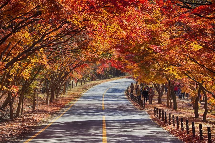 釜慶追楓~八公山、內藏山、松廣寺、韓屋村、彩繪村5日《不進人蔘、保肝》