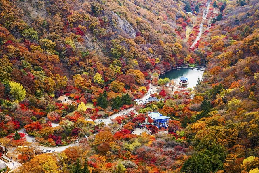 楓之釜~內藏山、八公山纜車、梵魚寺、韓服遊韓屋5日《不進人蔘、保肝》