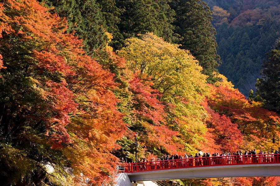 【迷你小團】四季櫻紅葉賞、古街散策、和紙體驗5日