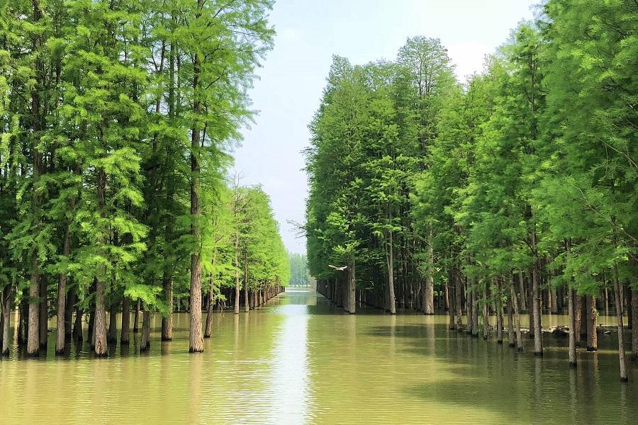【鼠來寶】隱水洞、洞庭湖、夢里水鄉、兩壩一峽武漢8日