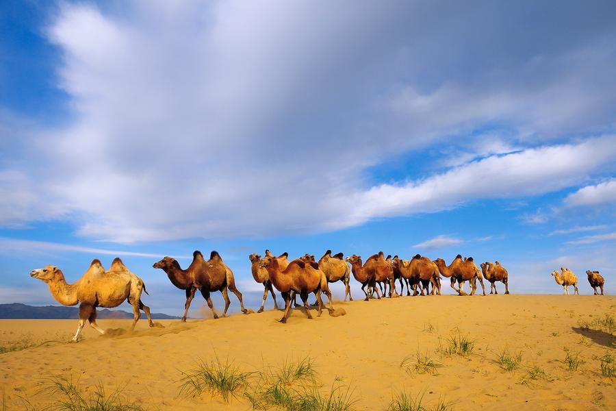 【大韓航空】藍天之下蒙古國、巴彥戈壁、特勒吉國家森林公園蒙古包體驗八日