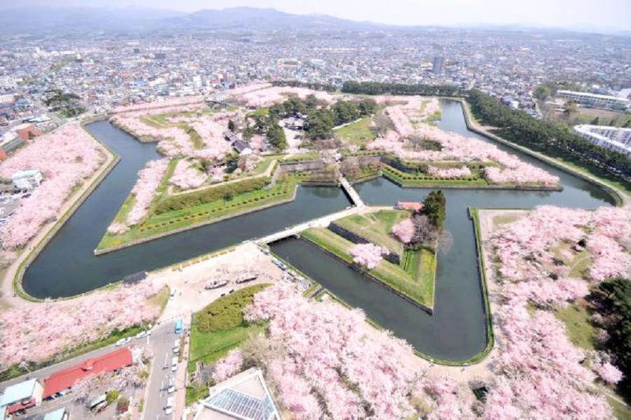 【北海道函館夜櫻花】小樽和菓子DIY、圓山動物熊牧場、粉櫻野餐行5日