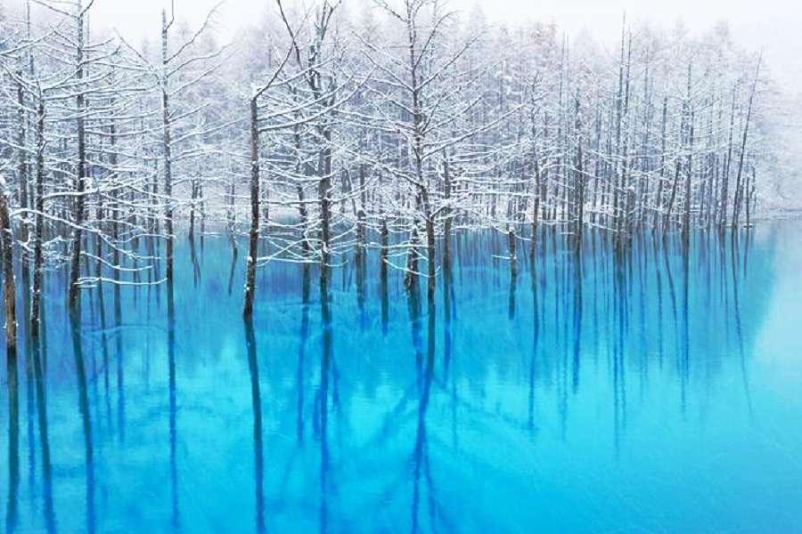 【冬戀北海道】雪國富良野、函館夜景、小樽藝術村、螃蟹和牛、万惣溫泉6日