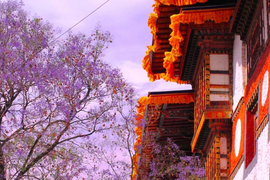 【主題旅遊】幸福不丹之旅-絕美藍花楹季+布姆塘策秋節 豪華十一日