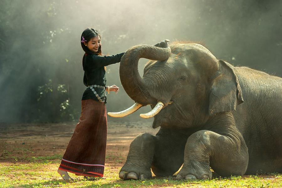 【漫活清邁】奢華四季、泰北饗宴、大象保育營、米其林餐廳五日《含稅簽》