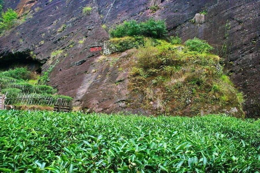 【松山直飛福州】福州高鐵來回武夷山茶文化深度之旅五日
