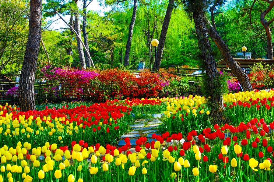 浪漫巨濟島、海上花園、順天灣濕地、寶成茶園、EWORLD樂園5日