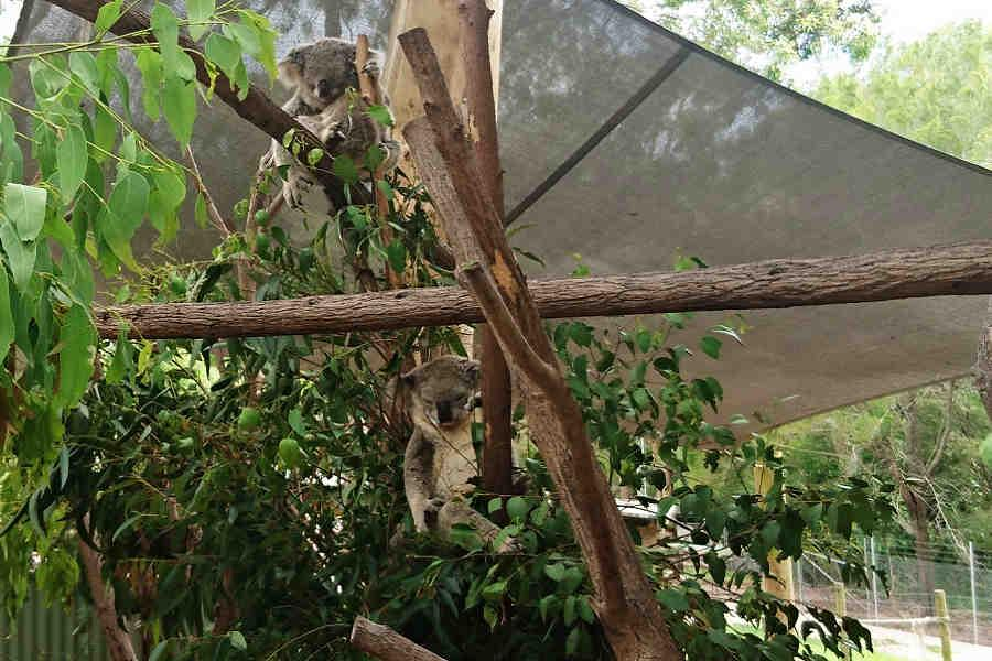 【擁抱無尾熊】澳洲雪梨黃金雙城7日~思洛美酒莊、野生袋鼠、農莊SB