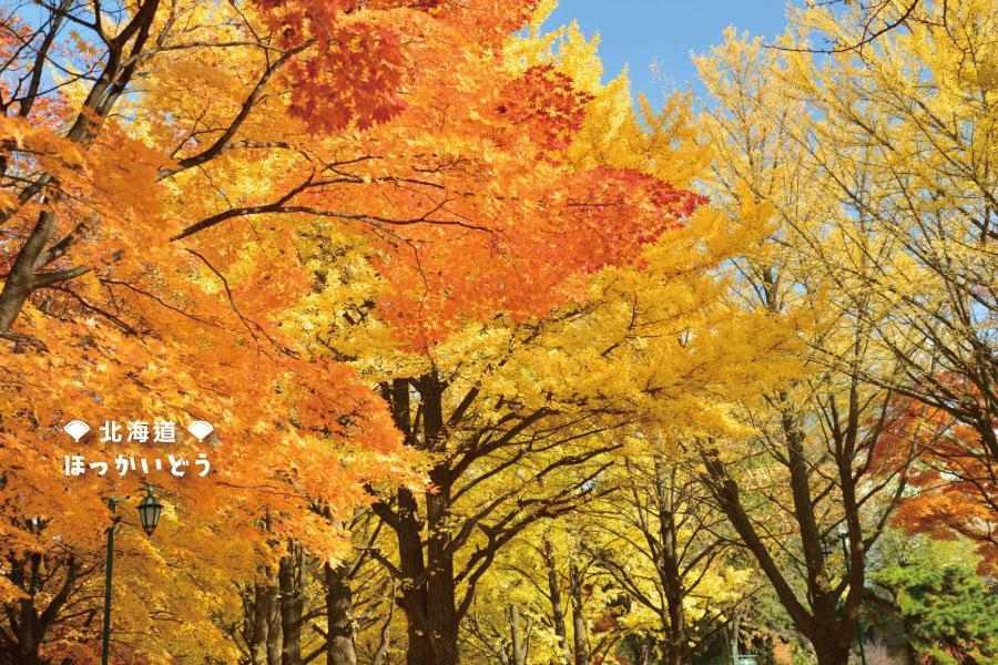 【秋楓北海道】函館夜景、登別尼克斯、銀杏並木、神仙沼好美、紅葉品蟹5日