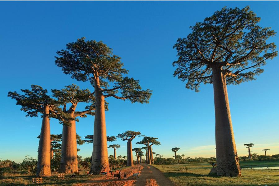 和平號【天藍星號】第9回基隆出發,非洲、南美~環遊世界101天