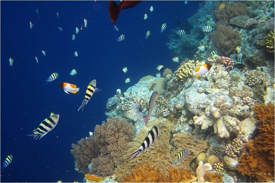 【豪華帛琉】北島海陸玩透透、二次出海、大斷層、海豚灣、牛奶湖、水母湖5日