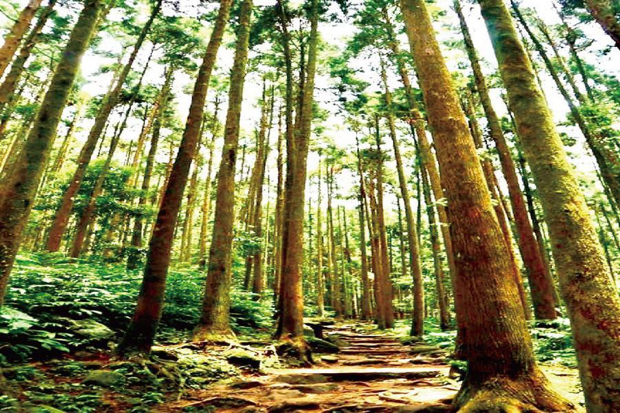 【台中出發 買一送一】 綠光小學~馬武督探索森林& 關西小鎮尋舊韻一日遊