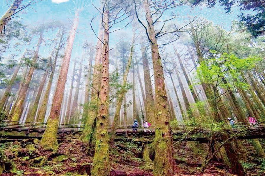 【台中出發 買1送1】探訪最美鐵道森林秘境~特富野古道一日遊