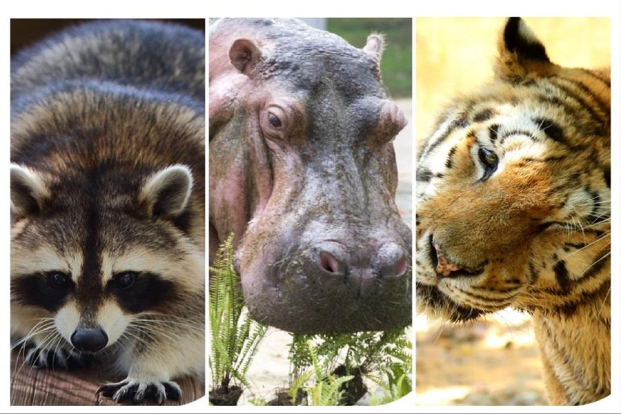 【台中出發】數樂趣新竹動物園親子遊一日