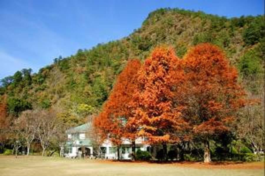【南投】奧萬大賞楓.清境農場.泡泡屋二日遊