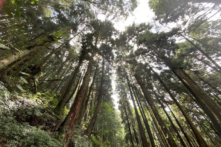 【四人成行小包團】特富野參天古木、日治舊鐵道、古道健行1日