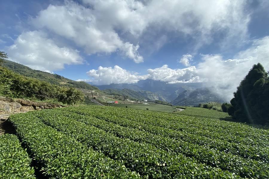 【嘉義】台北出發‧嘉義就醬玩‧阿里山五星級茶之步道‧絕美新地標古蹟美術館‧森林之歌‧來我嘉住一晚
