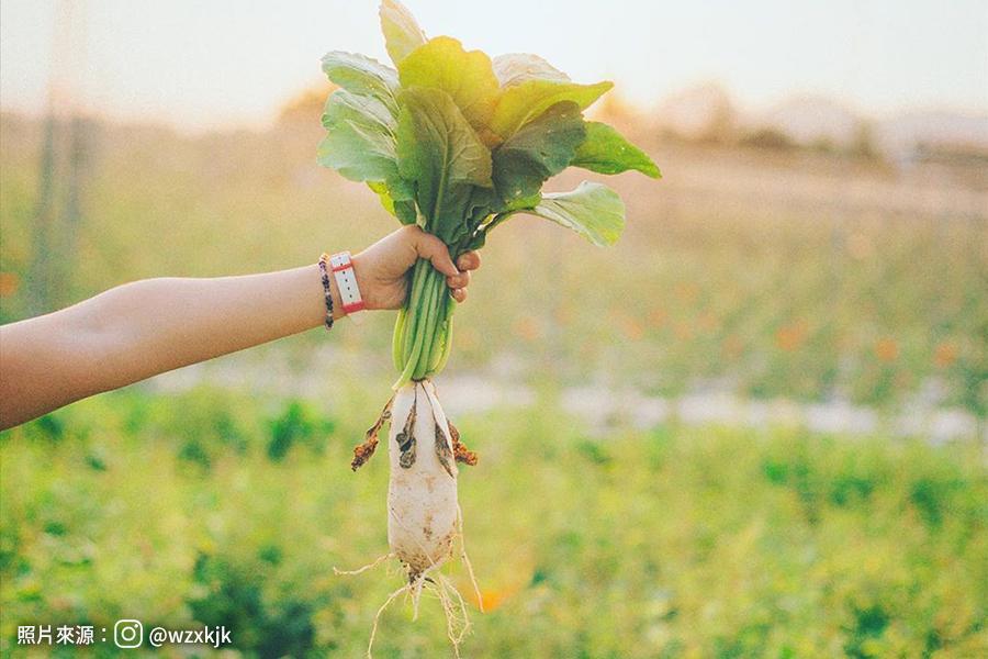【一日農夫】季節限定~白玉蘿蔔拔起來、月世界風景區、美濃客家文物館、百年山城旗山老街、油紙傘彩繪DIY1日
