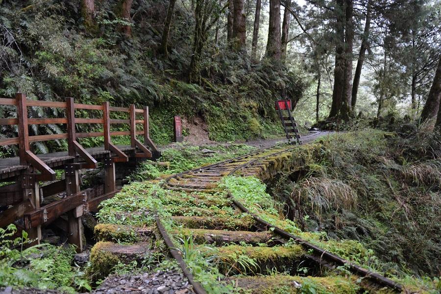 【宜蘭】太平山、漫步翠峰湖、見晴懷古步道、蔥農體驗、落羽松秘境3日