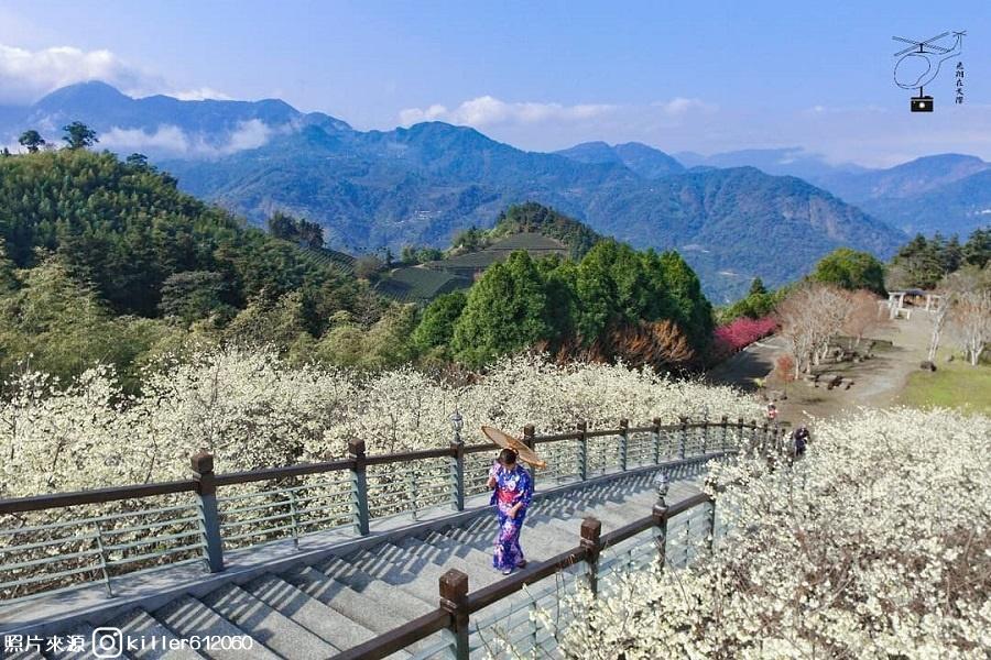【嘉義】浪漫櫻花秘境~寒溪呢森林人文叡地、蘿莎玫瑰山莊1日
