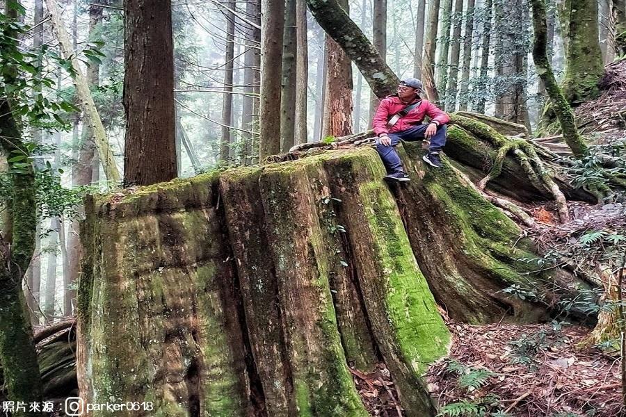 【新竹】觀霧森靈之美、檜山巨木群、擂茶DIY、巨大啤酒、崎頂千尋隧道3日