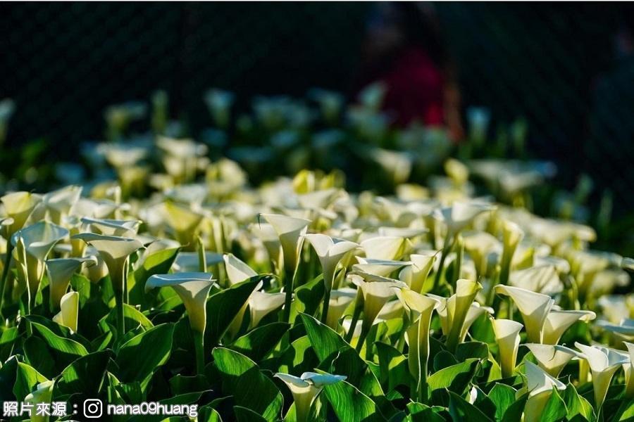 【雙北】老爺我來了!竹子湖耍花漾、西門唐吉軻德、鶯歌陶藝、四四南村、碧潭浪漫水岸3日