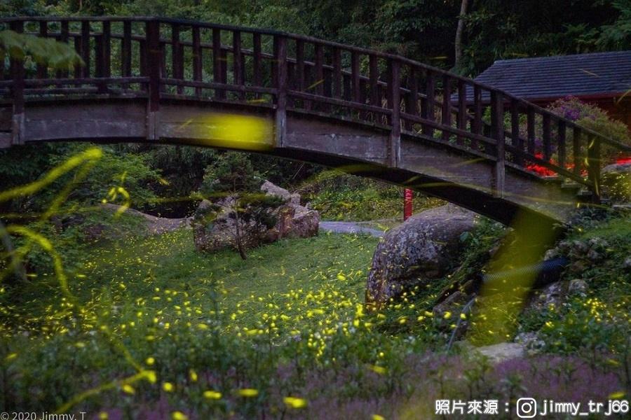 【嘉義】螢光點點在圓潭、森氧綠色隧道、瑞里茶香小旅行1日