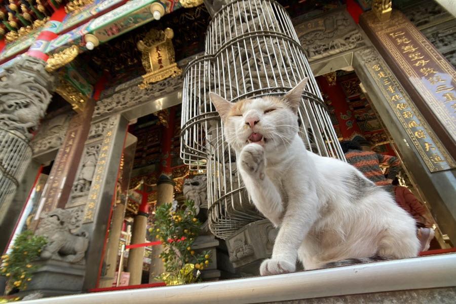 【心台灣❤毛起來玩】喵喵別跑、猴硐貓村、板橋動物之家、貓廟義天宮、深澳象鼻岩一日遊