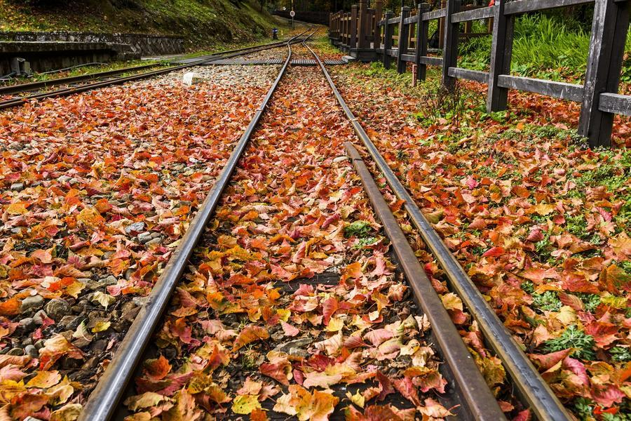 阿里山森林之歌、太平雲梯、苗栗舊山線鐵道三日