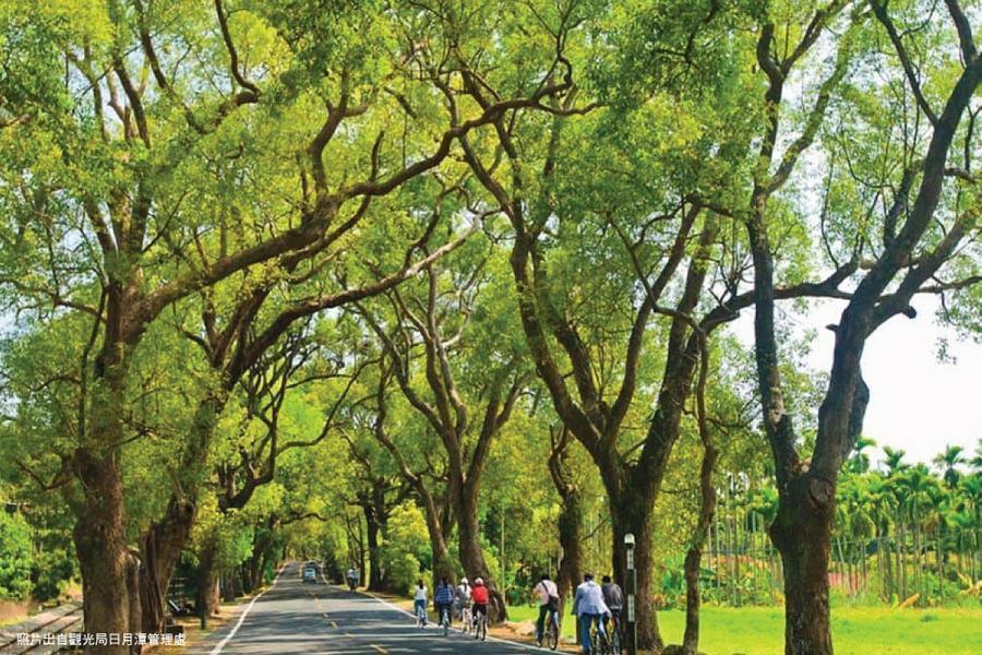 徜徉綠色隧道~單車恣意遊、集集小鎮老車站、旺財紫南宮、山蕉文化森林一日