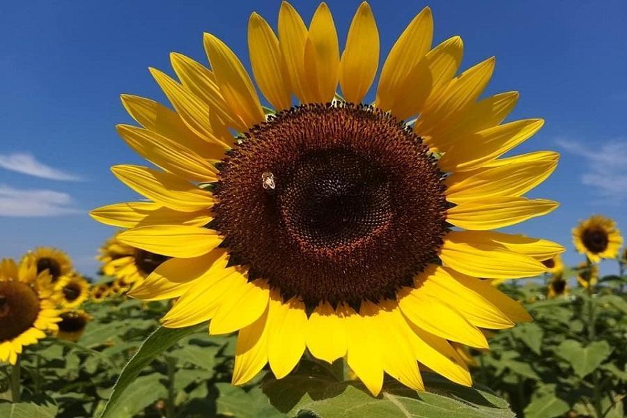 【花與樂】天御花園、東和音樂體驗館、卡司蒂拉、向陽農場2日(台南出發)