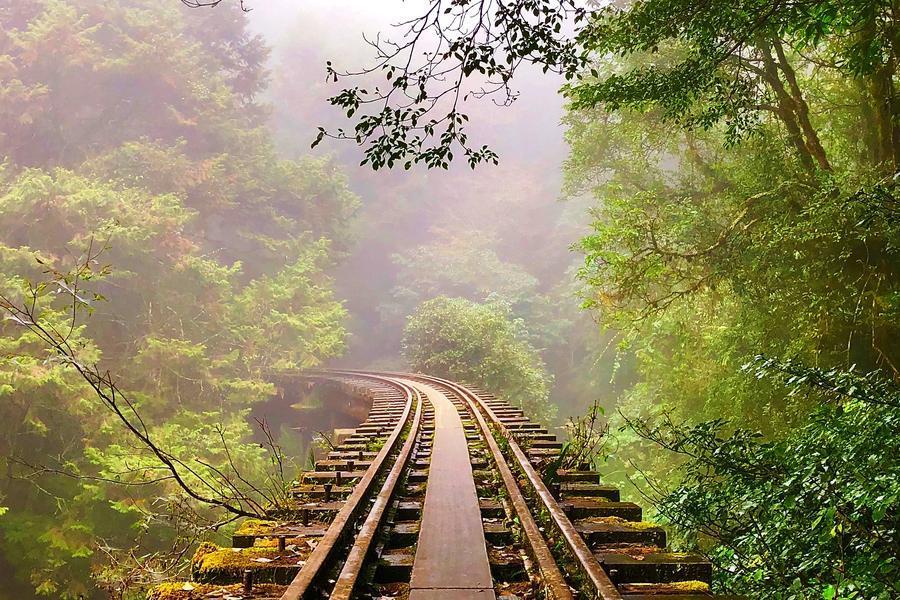 【走訪失落秘境】阿里山最美森林鐵道、眠月線健行1日