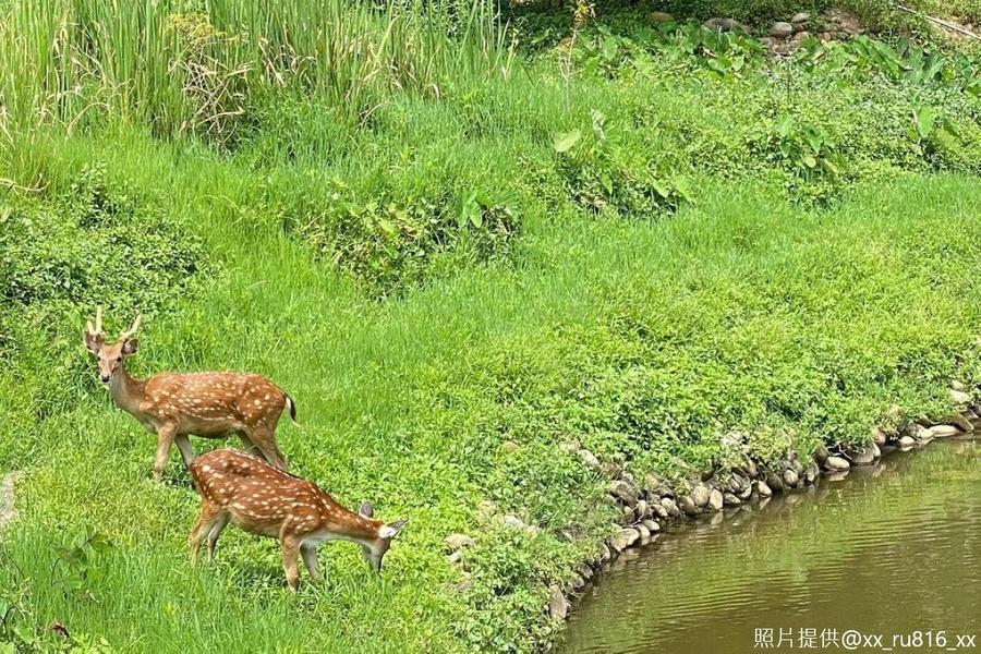 【桃園企陶趣】東眼山森呼吸、超萌水豚君、小鹿斑比餵食2日遊