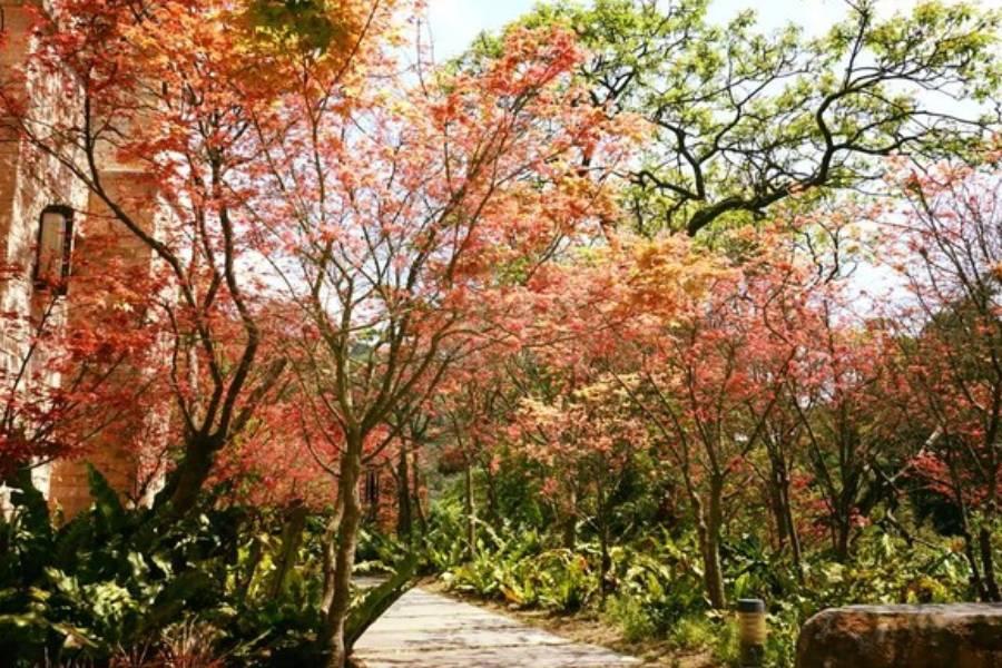 【東南賓士車】陽明山(季節花季)、金山老街嚐鮮、富貴角神祕海岸一日遊