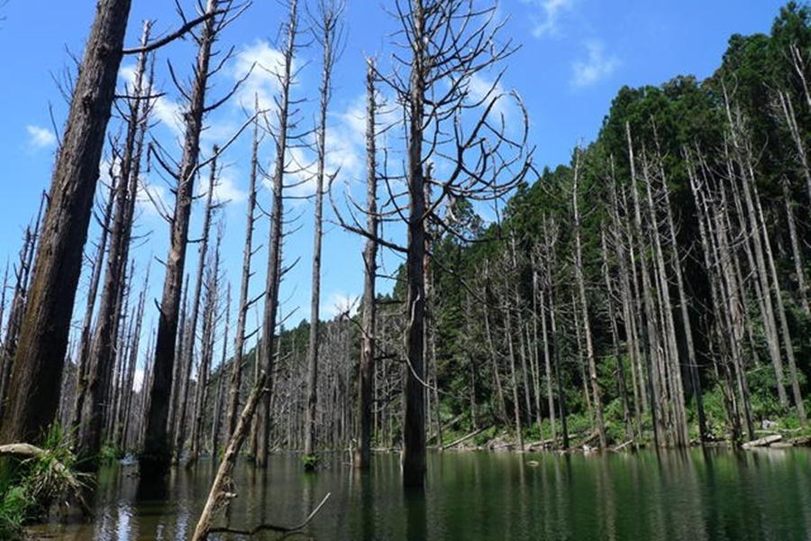 日月潭、杉林溪忘憂森林、溪頭米堤童話城堡三日