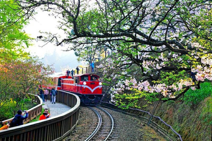 【台中出發】桃城漫遊、天空走廊、阿里山櫻花季兩日
