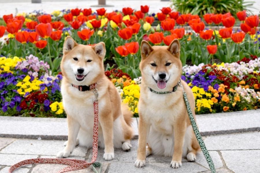 【毛起來玩❤汪汪玩台中】萌犬幼兒園、中社觀光花市、快樂狗餐廳1日遊