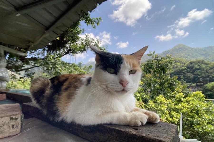 【漫步貓咪天堂,十分幸福】猴硐貓村、十分瀑布、十分老街 一日遊