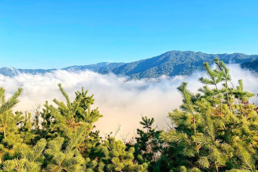 新竹雪霸綠光森林步道、苗栗天空之城花露農場浪漫花語二日