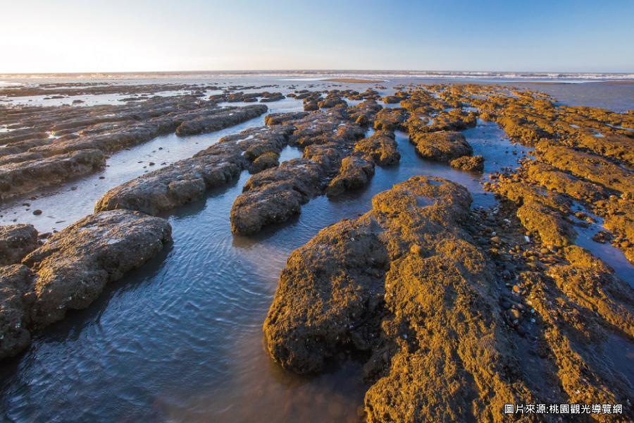 【一起尋藻愛】眷村博物館、賞蟹大道、永安漁港、觀新藻礁一日遊