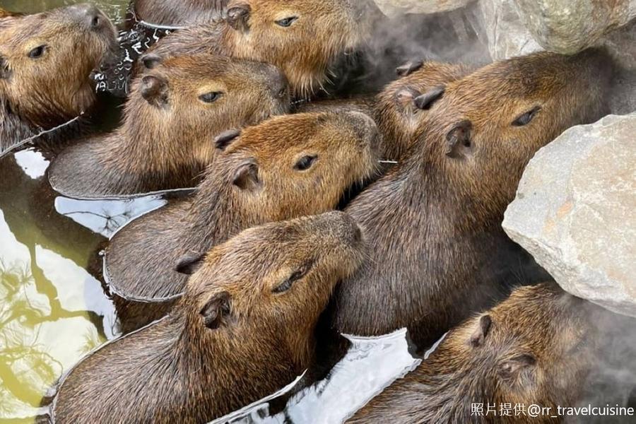 【桃園出發】田野尋蜜・農場餵鹿、可愛水豚君、冬山河生態綠舟一日遊