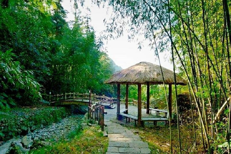 【台中出發】迷糊步道-部落導覽.百年老街奮起湖.茶園品茗漫遊一日
