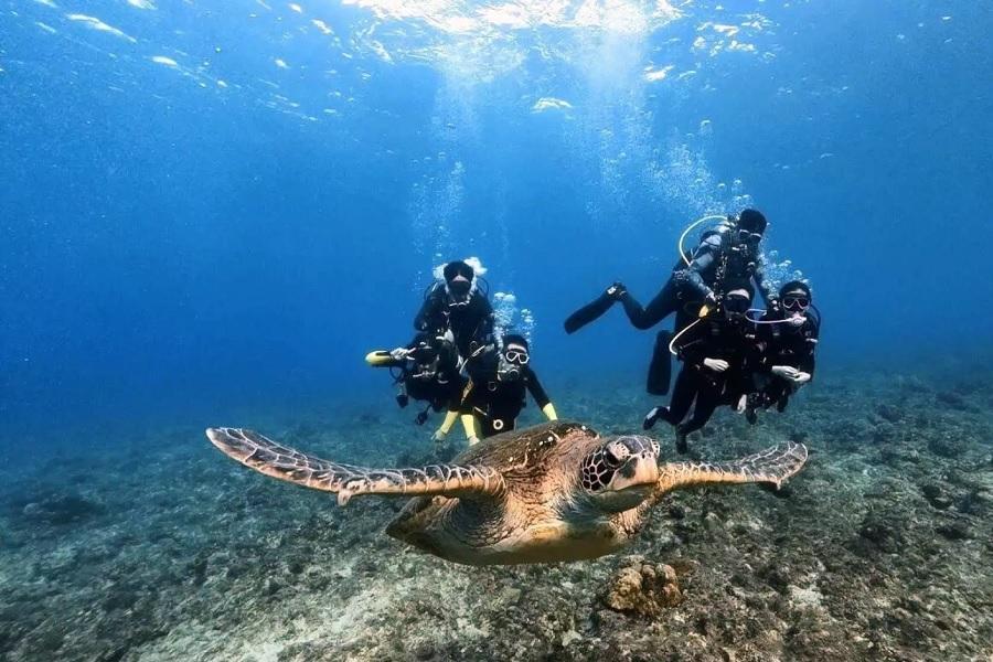 【小琉球】海洋潛水體驗(免潛水執照)一對一教學