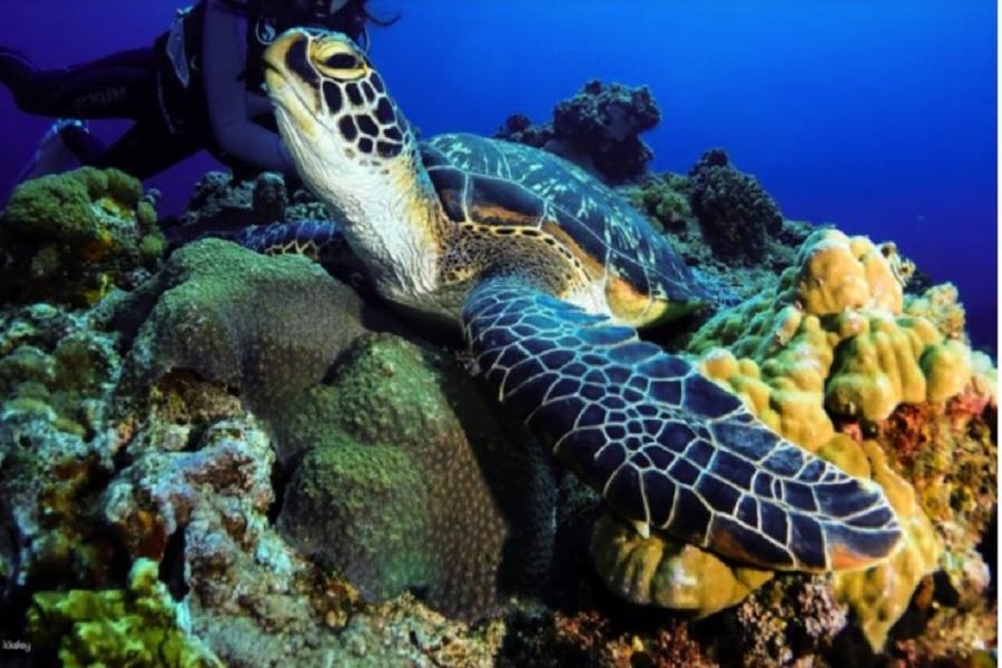 【綠島】綠島潛水 | 體驗水肺潛水 & PADI 初階開放水域潛水課程 | 熱浪潛水中心 (贈水中攝影USB)